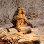 Najatraktivniji safari u Tanzaniji i Keniji