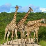 Turizam u fascinatnoj Africi
