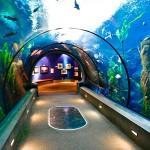 Najljepši svjetski akvariji