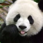 Top 10 zooloških vrtova u Europi