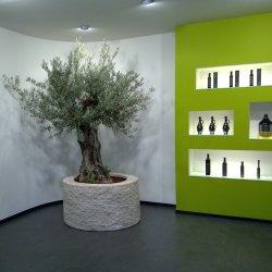 Maslinovo ulje Terra Istriana