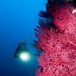 Podvodni turizam u Istri