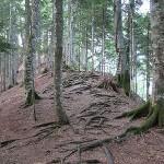 Perućica Sutjeska, zadnja prašuma u Europi