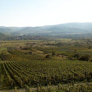 Vinska regija Tokaj – bajkovito područje