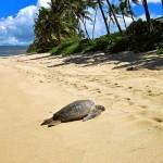 Hawaii, raj na zemlji