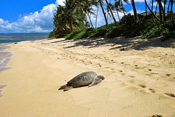 kornjača na plaži