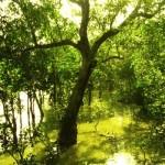 Nacionalni park Sundarbans