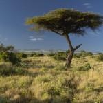 Nacionalni rezervat Amboseli