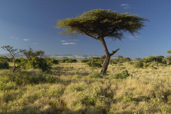 divljina afrike
