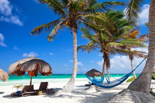 palme na plaži