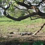 Nacionalni park Kakadu