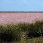 Ružičasta jezera